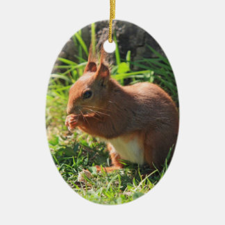 Squirrel red beautiful photo hanging ornament