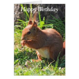 Squirrel red beautiful photo happy birthday card