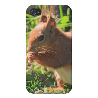 Squirrel red beautiful photo iphone 4 case