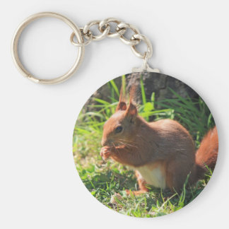 Squirrel red beautiful photo keyring, keychain