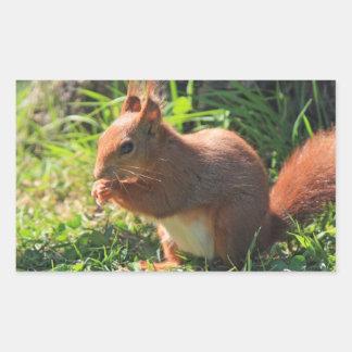 Squirrel red beautiful photo sticker stickers
