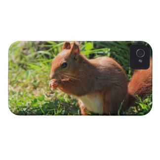 Squirrel red cute photo blackberry bold case iPhone 4 Case-Mate cases