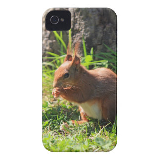 Squirrel red cute photo blackberry bold case