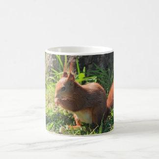 Squirrel red cute photo coffe, tea mug, gift
