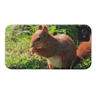 Squirrel red cute photo iphone 4 case mate