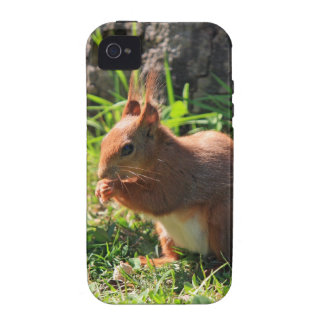 Squirrel red photo iphone 4 case mate tough