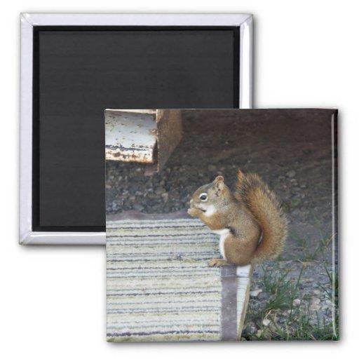 Squirrel Refrigerator Magnet