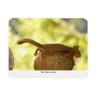 Squirrel Relaxing Magnets