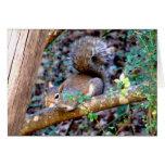 Squirrel Resting Greeting Card
