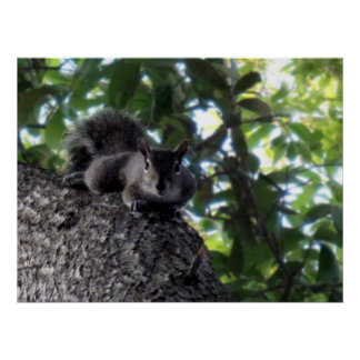 Squirrel Resting in Tree Poster