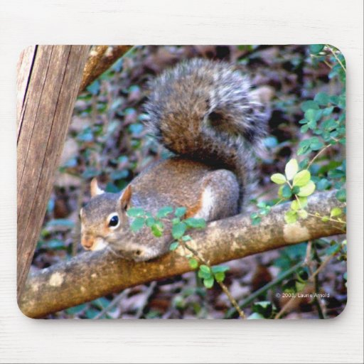 Squirrel Resting Mouse Pad