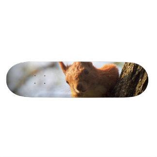 Squirrel Rodent Mammal Skateboard Deck