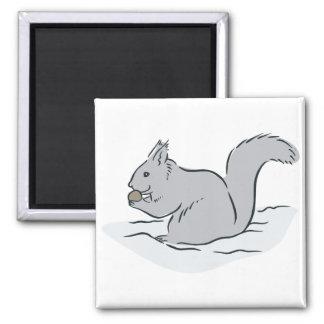 Squirrel Sciuridae Chipmunks Marmots Cute Cartoon Fridge Magnets