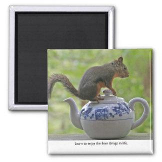 Squirrel Sitting on a Teapot Fridge Magnet