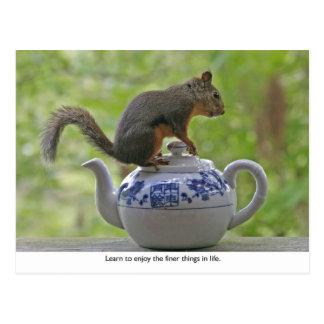 Squirrel Sitting on a Teapot Postcard