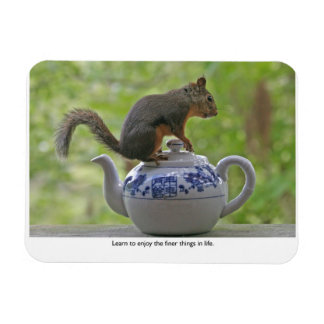 Squirrel Sitting on a Teapot Vinyl Magnets