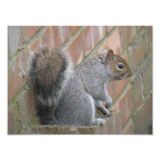 Squirrel Sitting on a Wall Photo Print