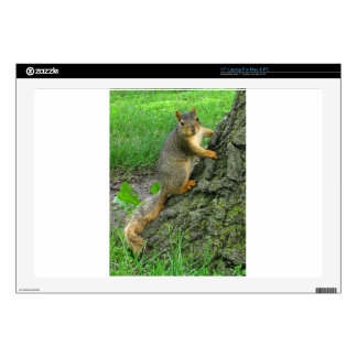 """SQUIRREL! DECAL FOR 17"""" LAPTOP"""