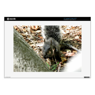 Squirrel Decals For Laptops