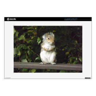 "Squirrel Skin for 15"" Laptop Laptop Decals"