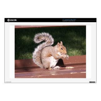 "squirrel skin for 17"" laptop"