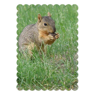 "Squirrel Snacking 5"" X 7"" Invitation Card"