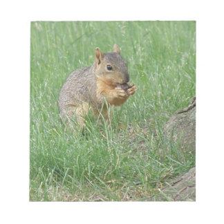 Squirrel Snacking Memo Pad