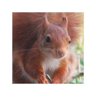 Squirrel squirrel - photo Jean Louis Glineur Canvas Print