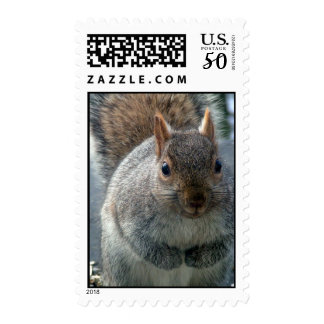 Squirrel stamp