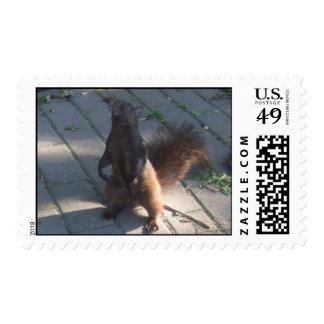 Squirrel Stamp
