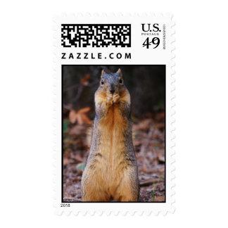 Squirrel Stance Postage