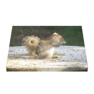 Squirrel Stealing Bird Seed Canvas Print