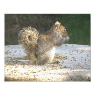 Squirrel Stealing Bird Seed Photo Print