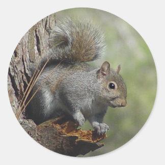 Squirrel Sticker 2