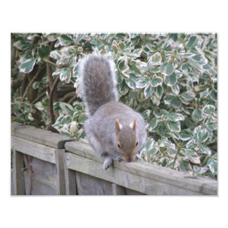 Squirrel Sticking up its Tail Photo