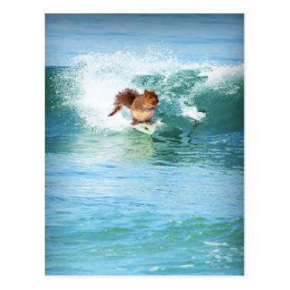 Squirrel Surfer On The Sea Post Card