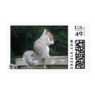 Squirrel Turns its Back to Snack Postage Stamps