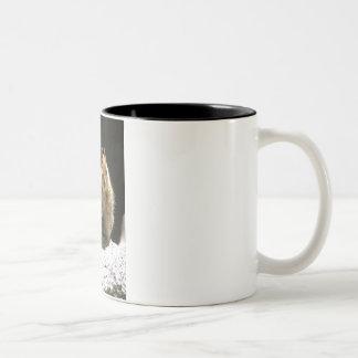 Squirrel Two-Tone Coffee Mug