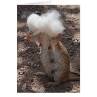 Squirrel vs. Samoyed Fur Greeting Card