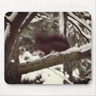 Squirrel Winter Photo  Mousepad