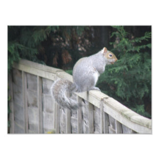 Squirrel with a Curly Tail Photo Print