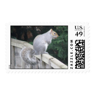 Squirrel with a Curly Tail Postage Stamp