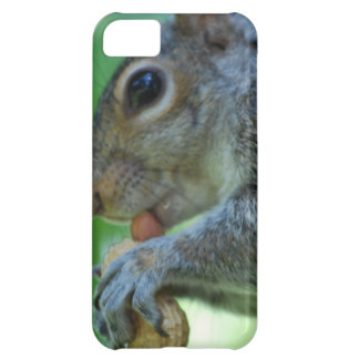 Squirrel with a Nut iPhone 5C Cases