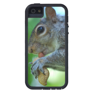 Squirrel with a Nut iPhone 5 Cases