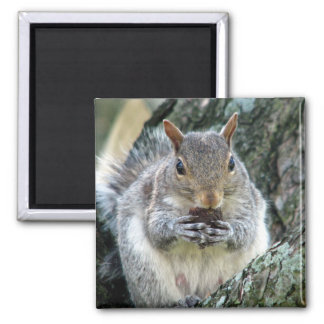 Squirrel with a Nut Magnet