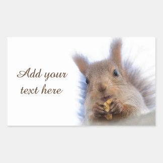 Squirrel with a walnut rectangular sticker
