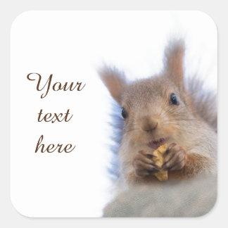 Squirrel with a walnut square sticker