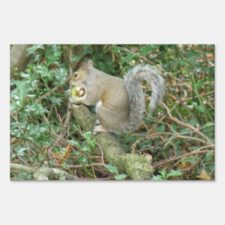 Squirrel with Acorn Funny Decorative Sign