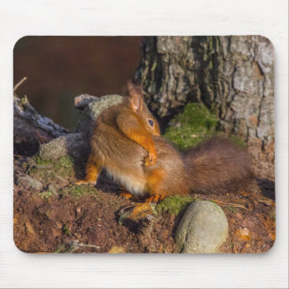 Squirrel With An Itch Mouse Pad