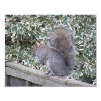 Squirrel with Bushy Tail Photo Print
